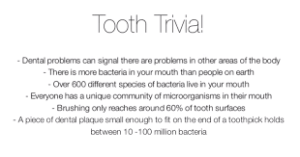 tooth trivia