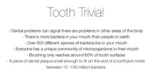 tooth trivia